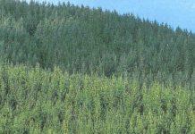Corrientes y Misiones 800 hectáreas forestadas
