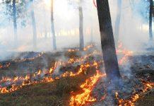 quema forestal controlada