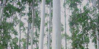 foresto industria corrientes