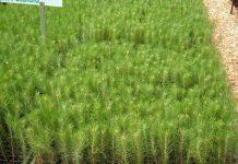 ley 25080 beneficios para plantadores y empresas