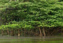 curso post grado 2018 genetica forestal