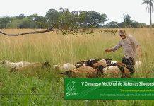 silvopastoril bosques nativos