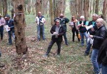necochea jornada forestal