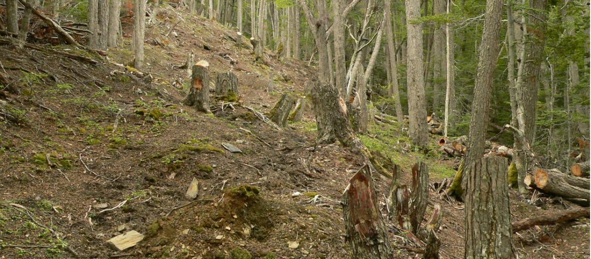 inta bosques nativos