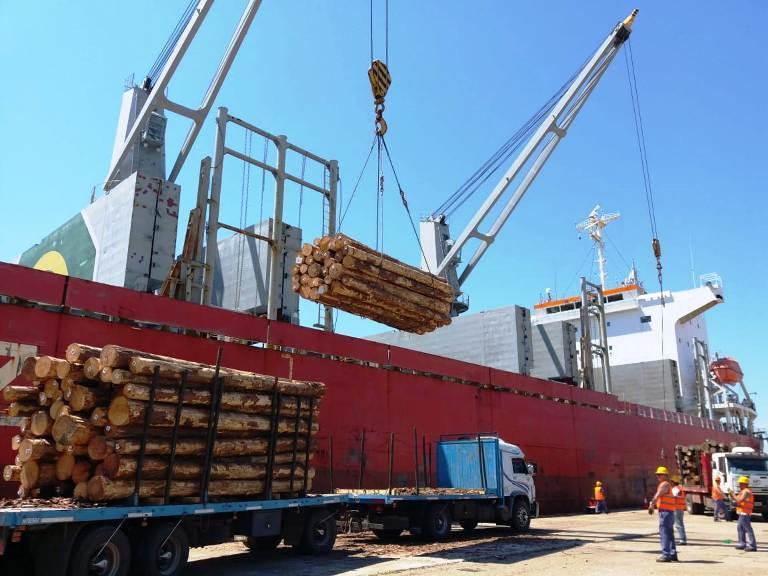 exportaciones rollos pino
