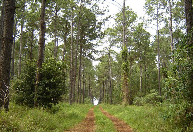 cosumo agua bosques