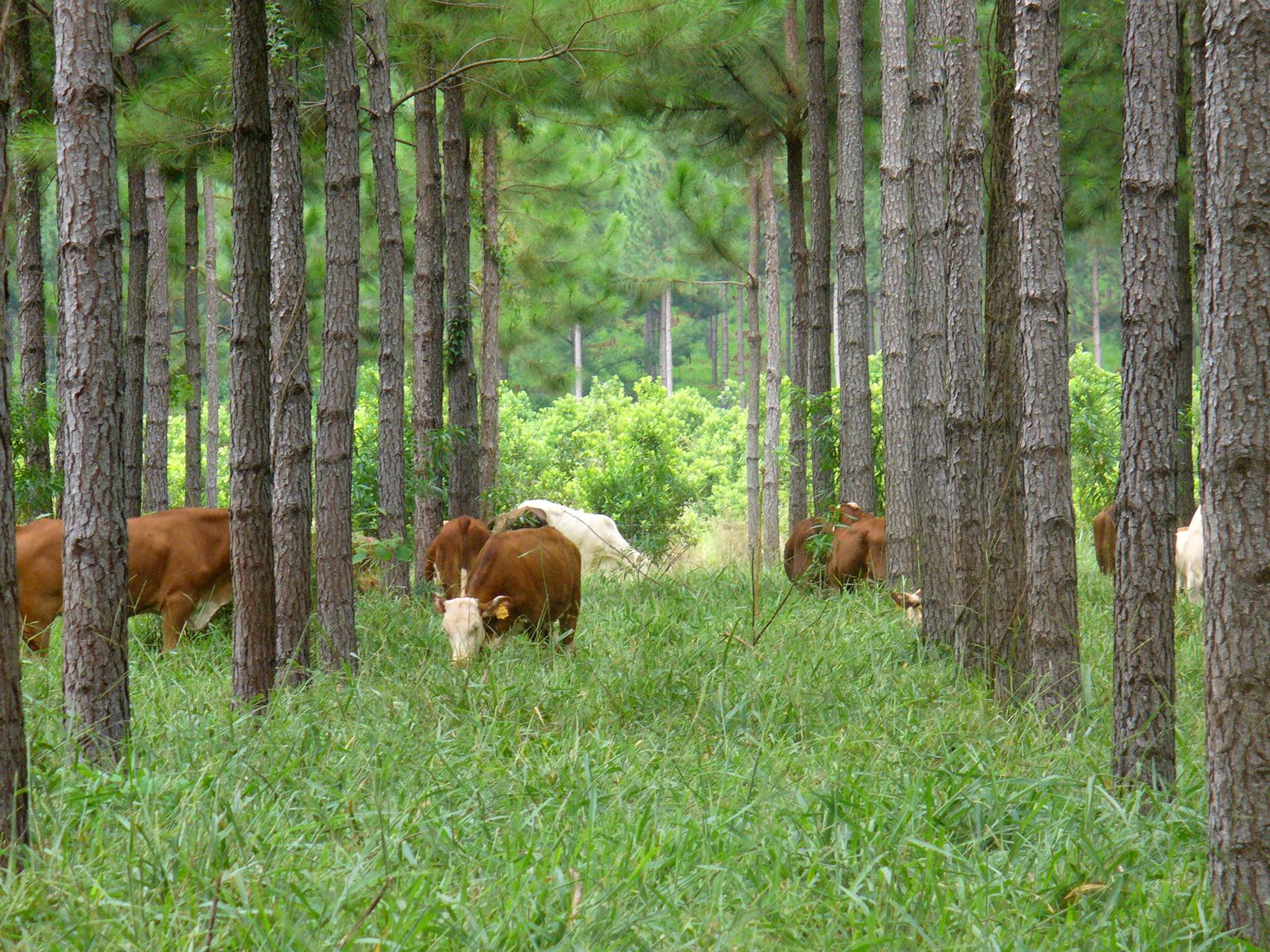 compleja situación foresto industria