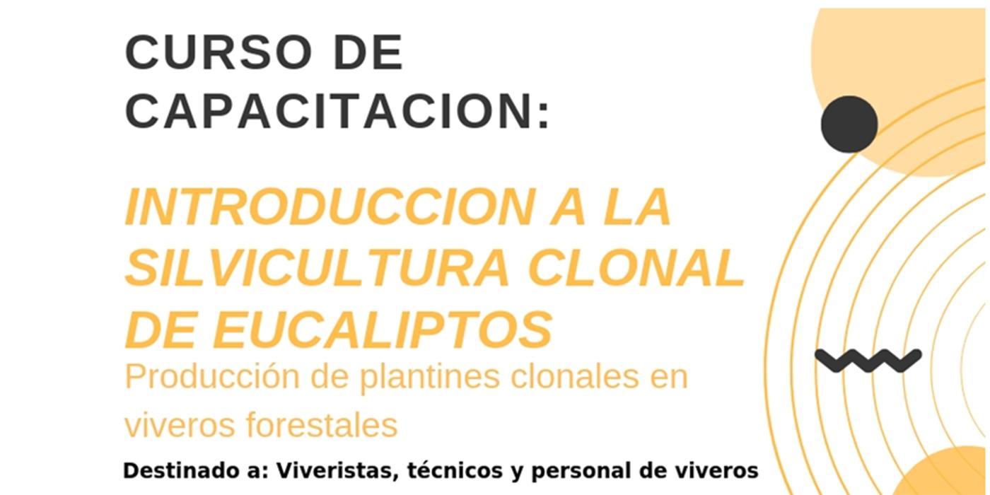 curso silvicultura clonal eucaliptos