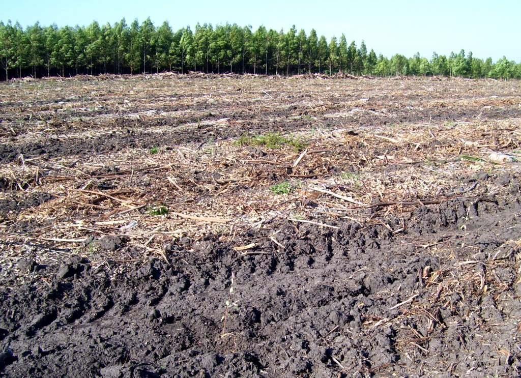 residuos forestal mesopotamia