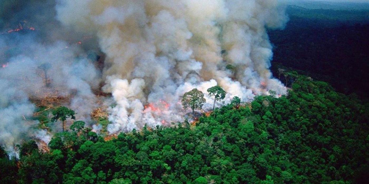 incendios en amazonas causas