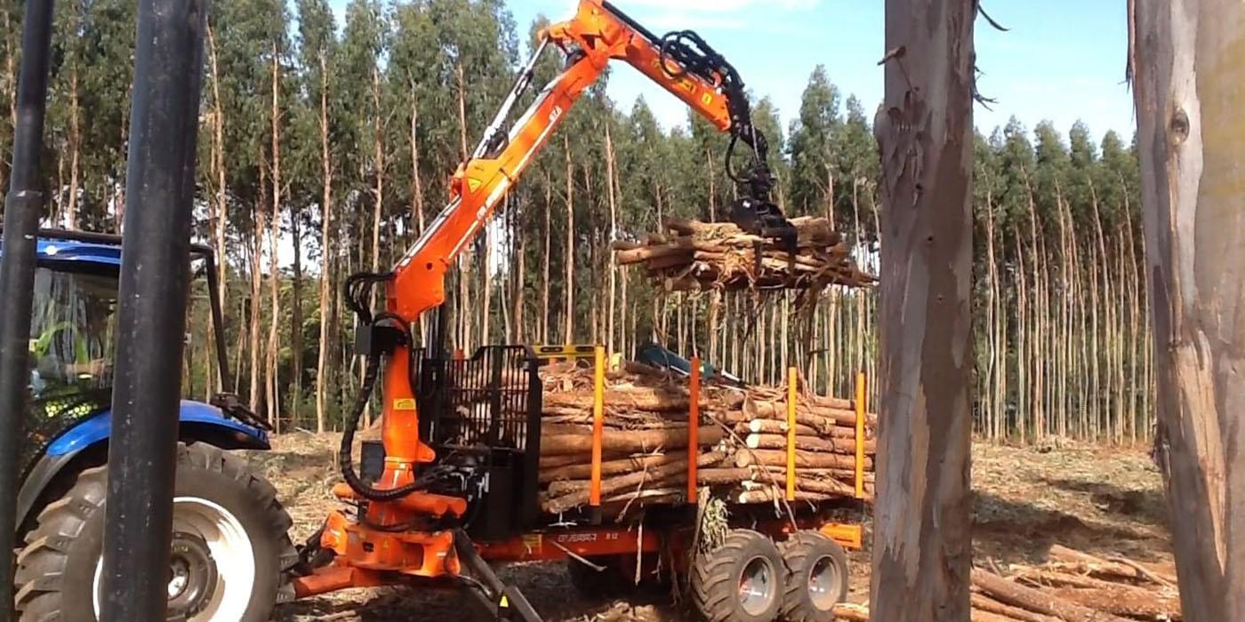 feria forestal argentina 14º edicion