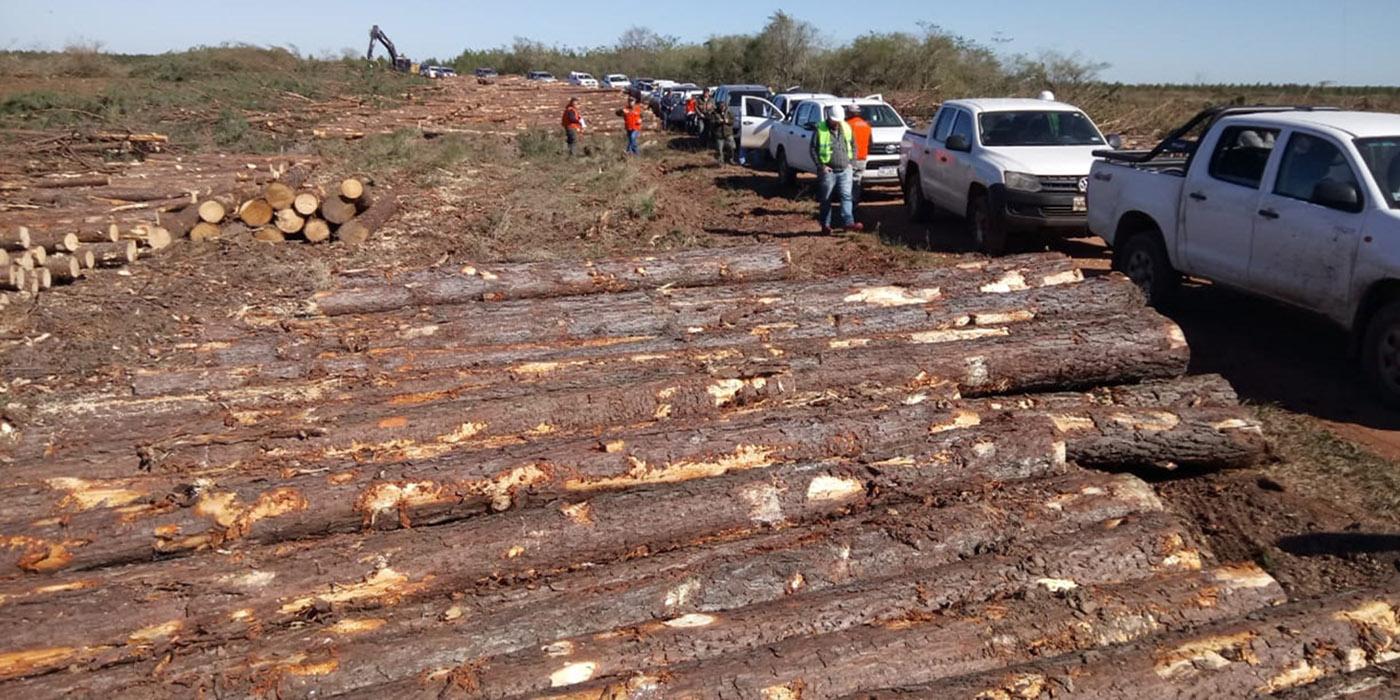 masisa corrientes 140 forestadores
