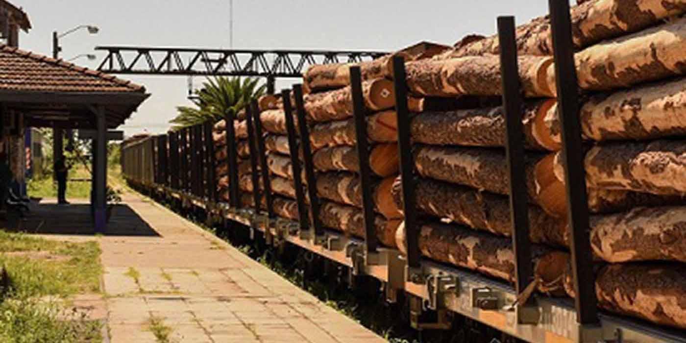 urcel exportación rollizos pino
