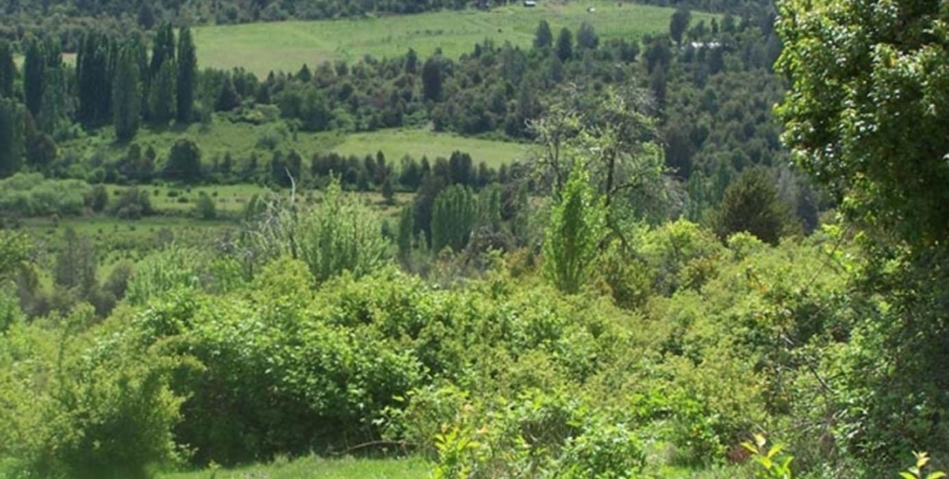 rol estratégico de bosques