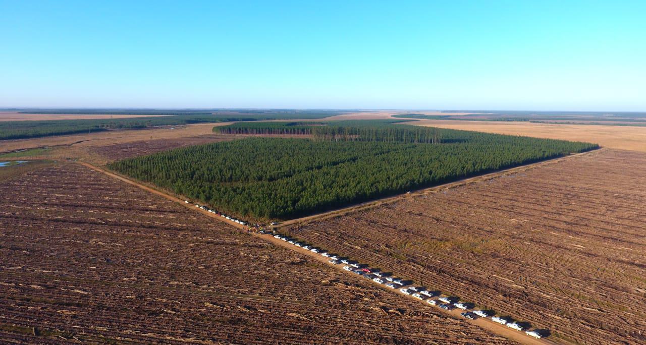 Corrientes industrializar bosques cultivados