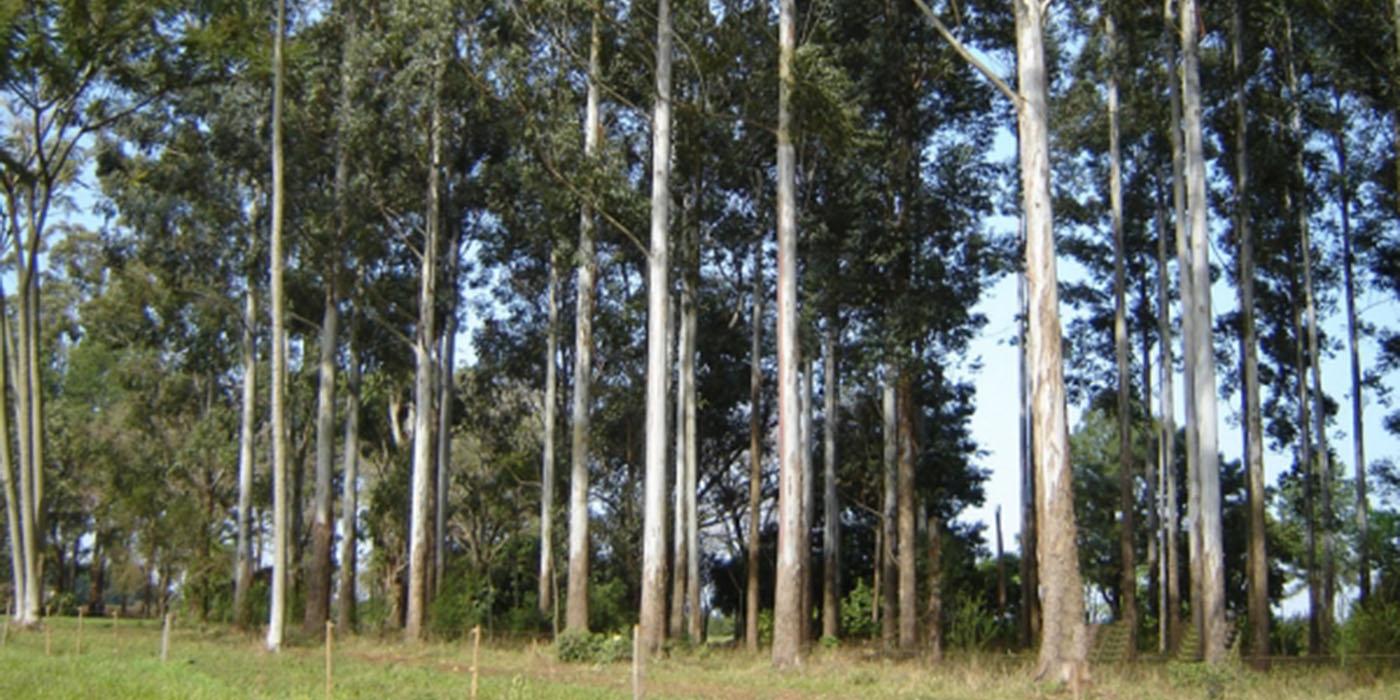 actualidad sector forestal entrerriano