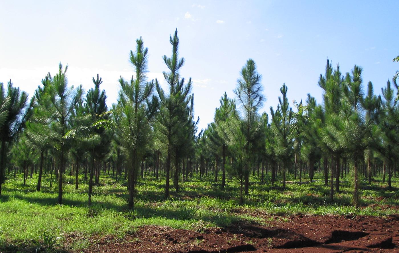 Dirección Nacional Desarrollo ForestoIndustrial