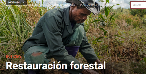 Restauración forestal en África