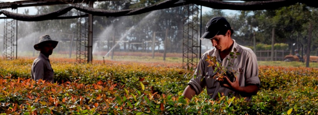 Corrientes Agricultura Seguros Verdes