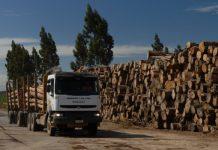 transporte madera