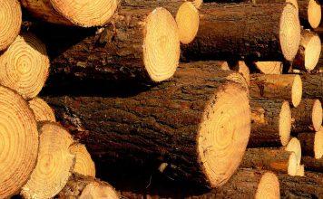 rollos de pino