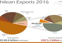 exportaciones chips eucalipto chile