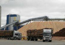 exportacion madera uruguay