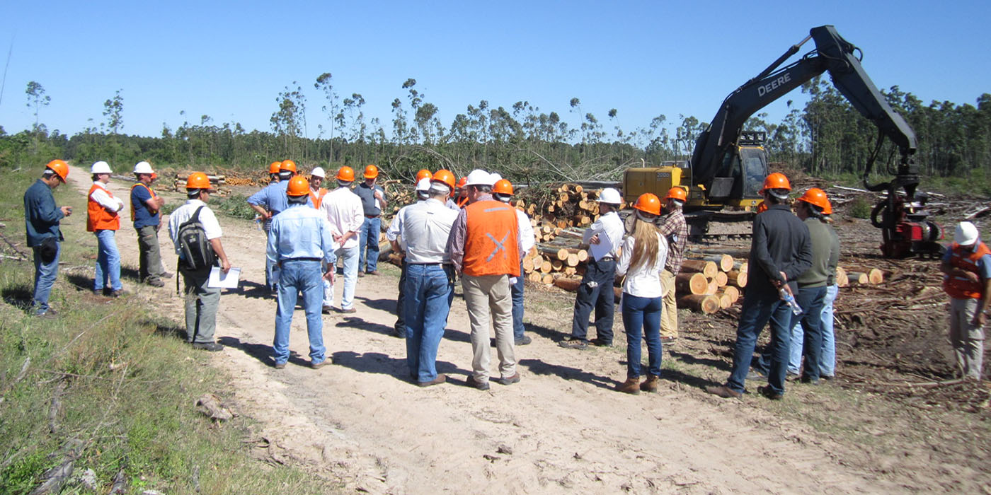 temas sector forestal