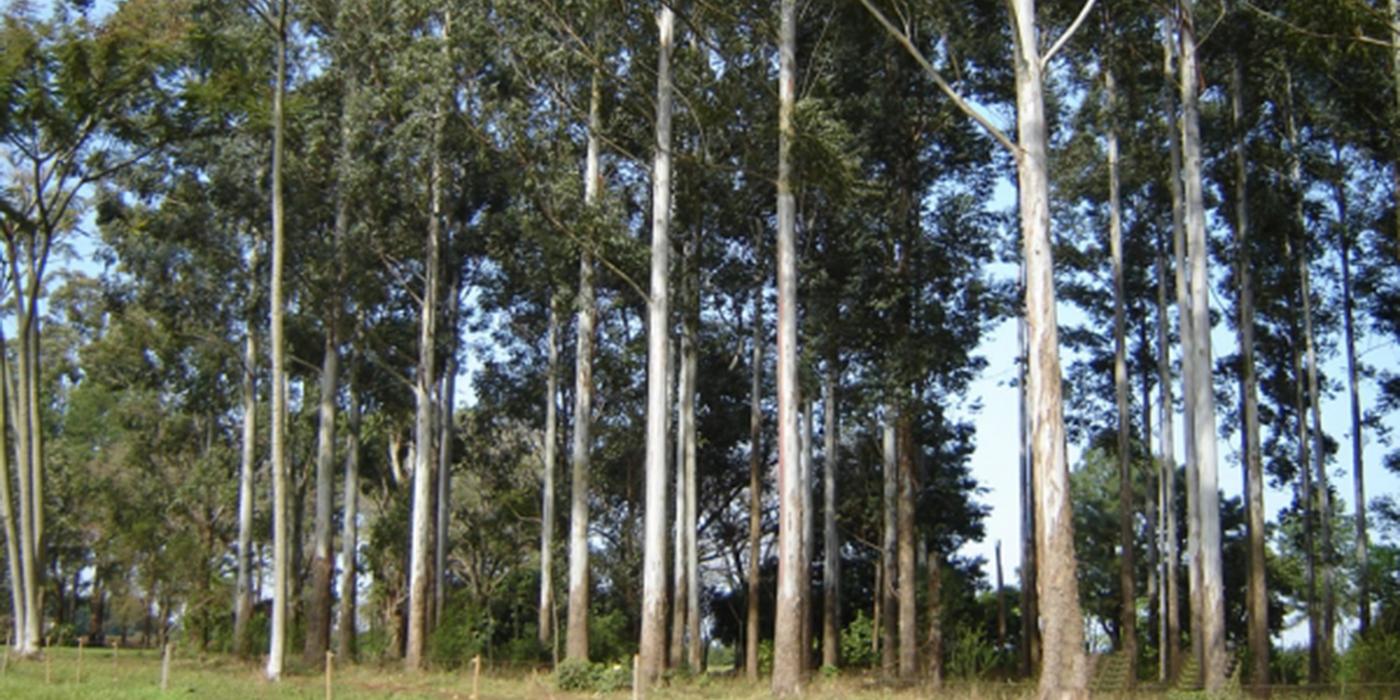 forestaciones entre rios 2018