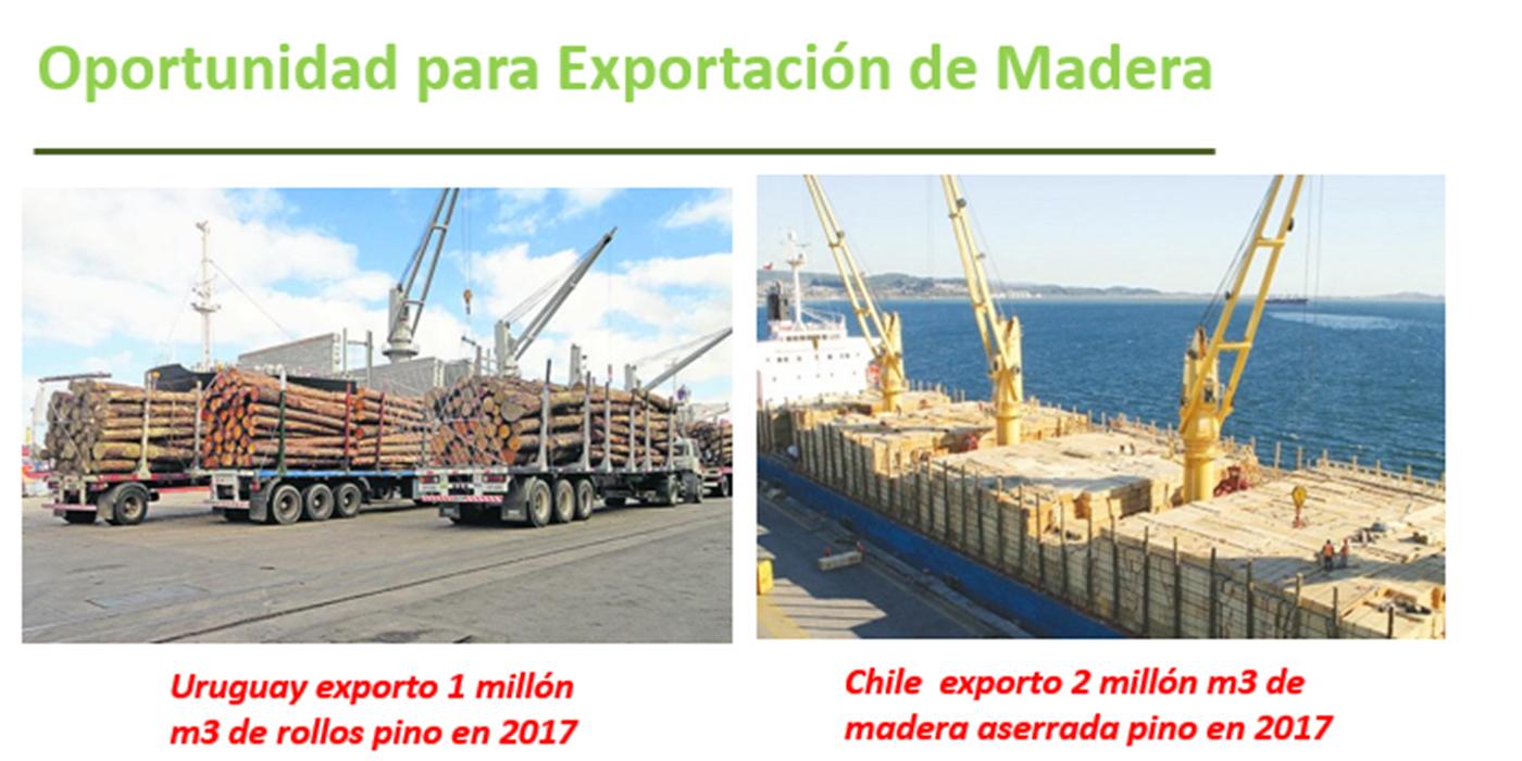 infraestructura exportaciones forestales argentinas