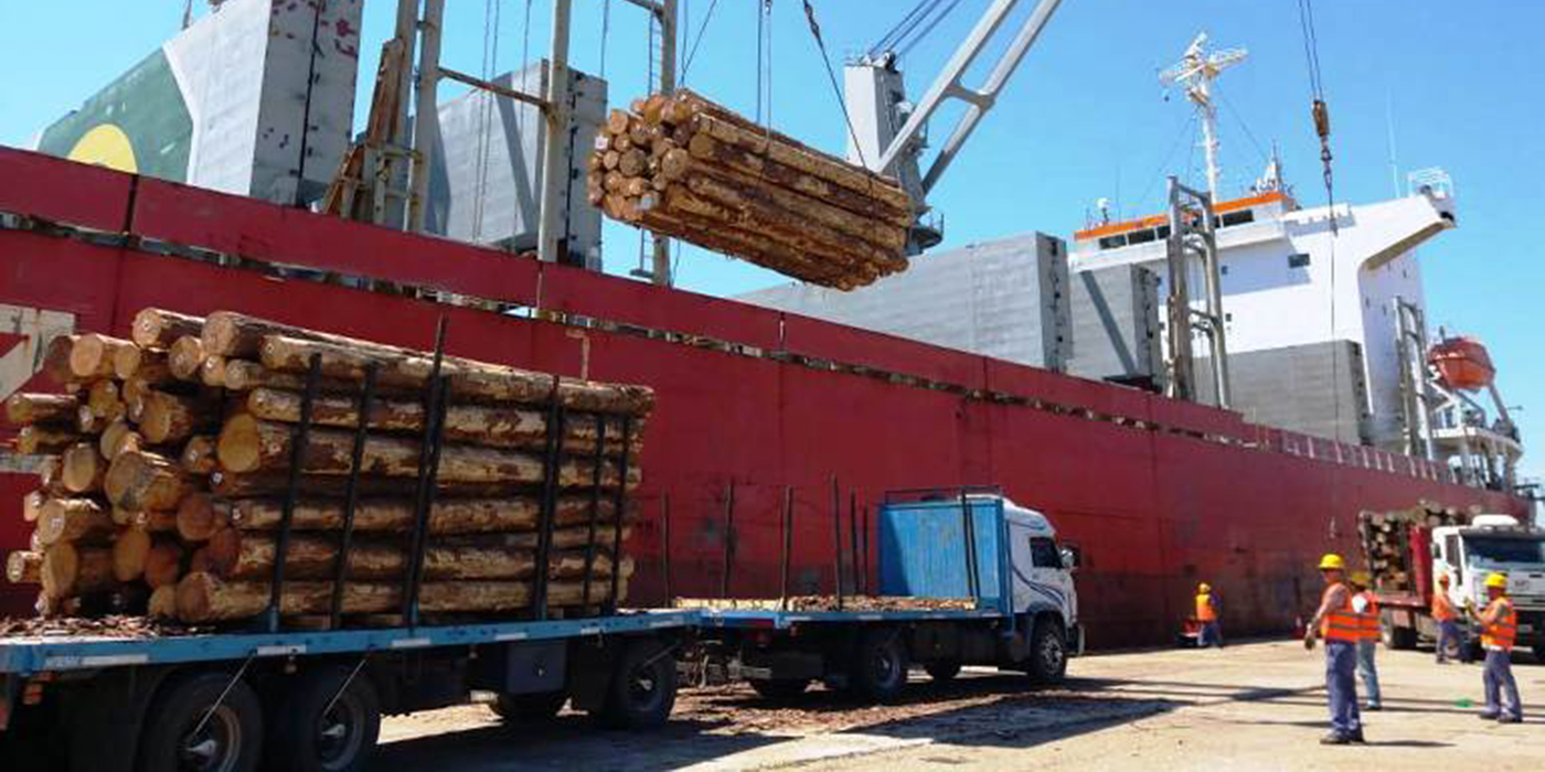 exportaciones rollos pino china