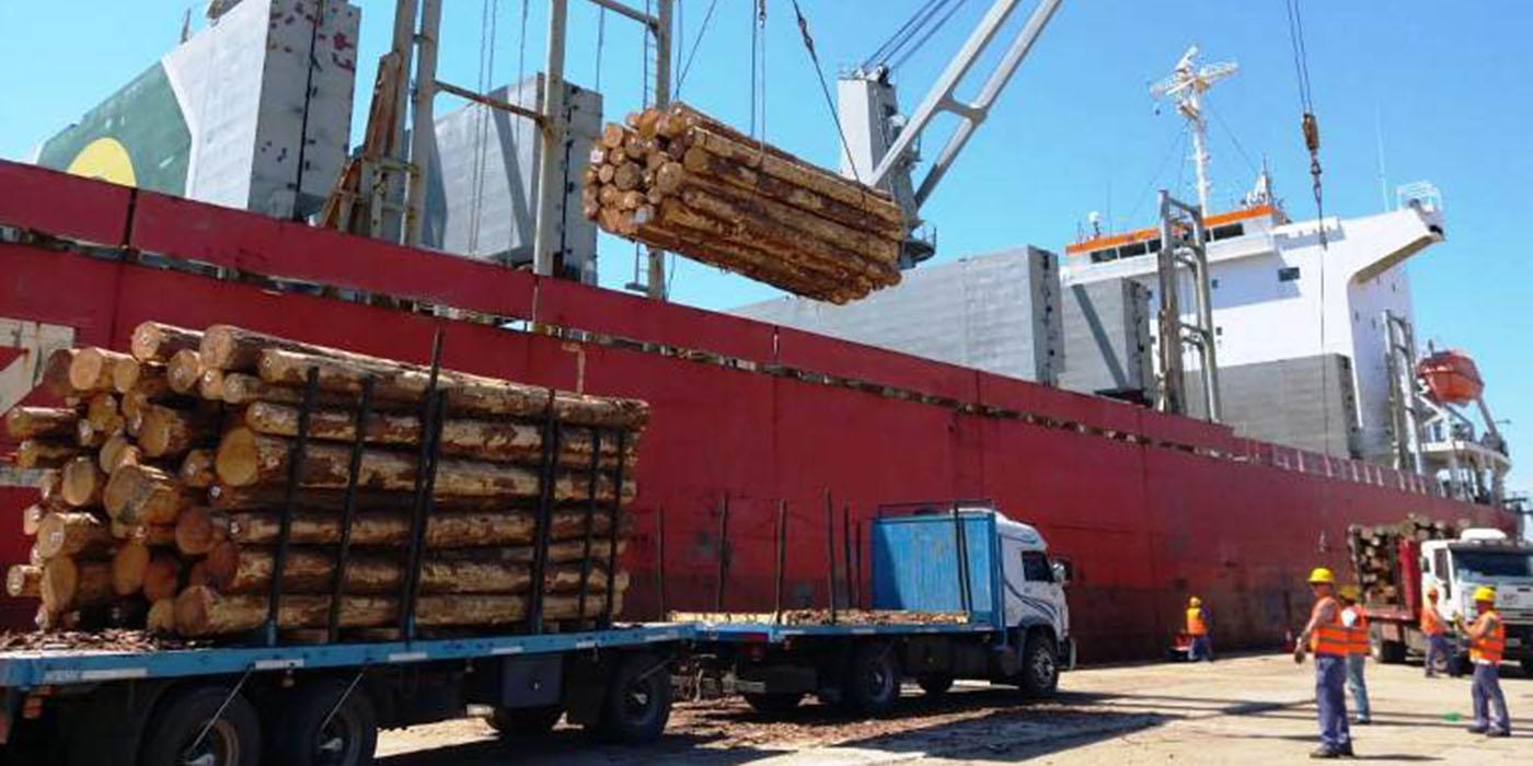 dirección nacional exportación rollizos