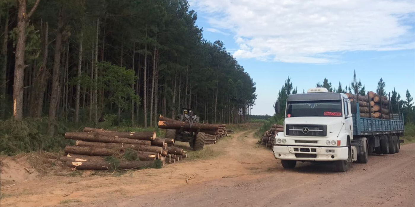 valor de la madera